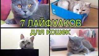 7 ЛАЙФХАКОВ ДЛЯ ВЛАДЕЛЬЦЕВ КОТОВ И КОШЕК)