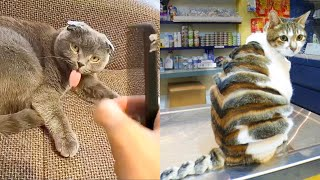 Funniest Animals - Best Of The 2021 Funny Animal Videos #53