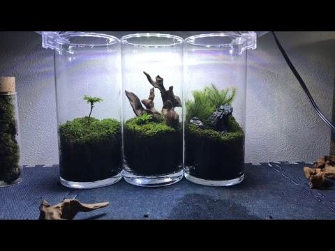 【水槽LIVE】手に入れた苔を苔リウムに進化させる。