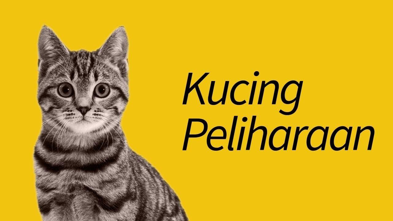 Download 67+  Gambar Kucing Lagi Pusing Paling Baru
