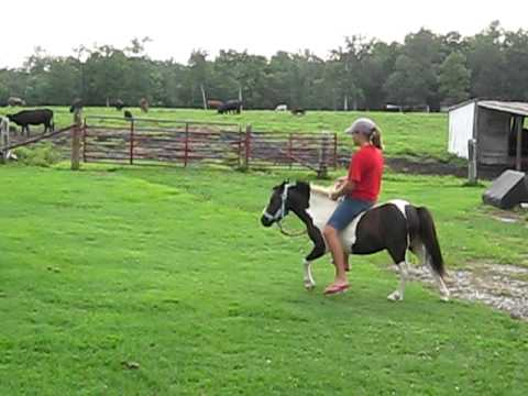 Riding the Wild Bucking Pony