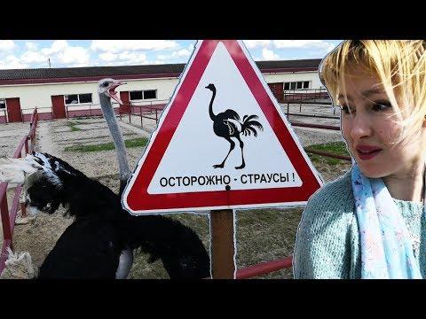 Осторожно, страусы! #Ферма #Русский #Страус