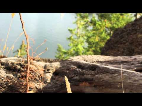 """Tereza Tomek- """"UpRooted"""" OFFICIAL VIDEO"""