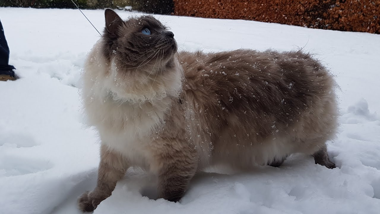 Cute Cat in Snow for the first time!