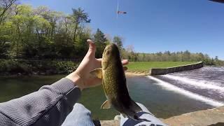 PA Trout Fishing - Laurel Run, Whipple Dam State Park