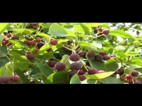 Video - https://youtu.be/d_f5-TORNLY