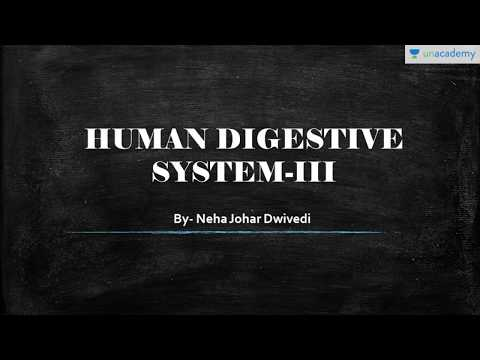 Digestion and Absorption in Human Body: Human Digestive System Part 3