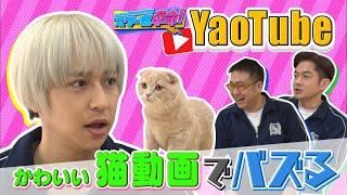 世界でバズりたい八乙女の挑戦企画、「YaoTube」第2弾! 八乙女といえば、自他共に認める、大の猫嫌い。 しかしSNSで「猫」は圧倒的支持を誇るキラーワード! インスタ ...