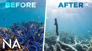 The Great Reef Is NOT Dead