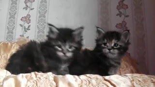 ЛИРИКУМ ЦеЯ и Цесаревна 1 месяц