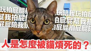 好味小姐-真的是會被短褲煩死-跟貓咪工作第二彈-好味貓日常-ep62