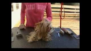 Grooming A Yorkie In A Long Coat