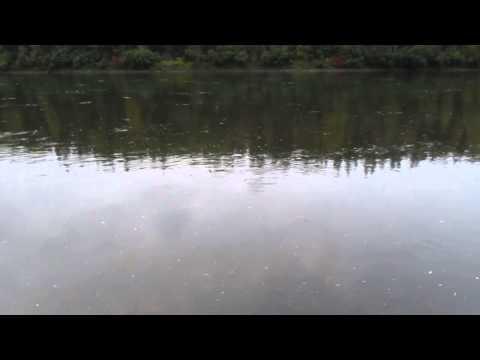 красноярский край рыбалка елец