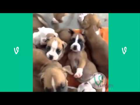 The Best Cats and Dogs Vines ever !!!!!!