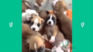 Repeat youtube video The Best Cats and Dogs Vines ever !!!!!!