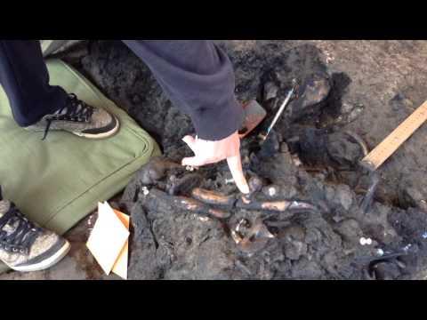Excavating Ice Age animal bones La Brea Tar Pits