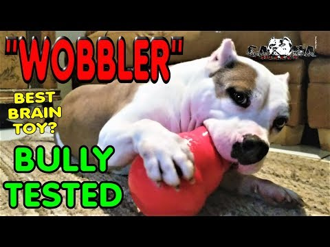 best-chew-toy-for-large-breeds---kong-wobbler---american-bully-tested