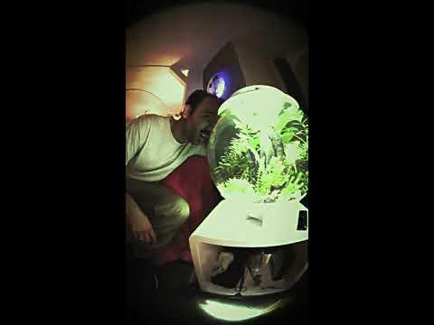 AlphaMob x Caramelo -  Schiebedach on YouTube