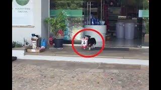 自分で買い物をして、商品を家に持ち帰る犬がとても可愛いい! ブラジル...
