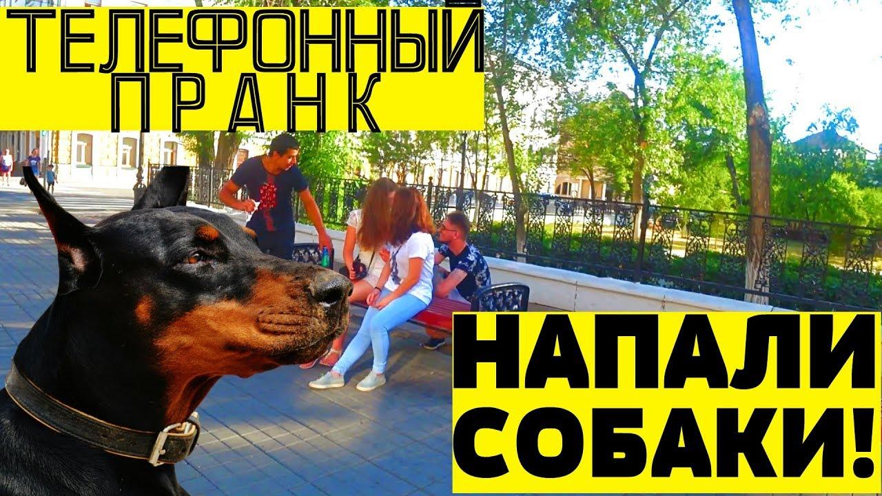Телефонный пранк | Напали злые собаки | Фотограф-любитель | KUMARTV