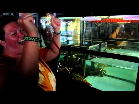 Amy DeBerg grabs Lobster in Florida Keys