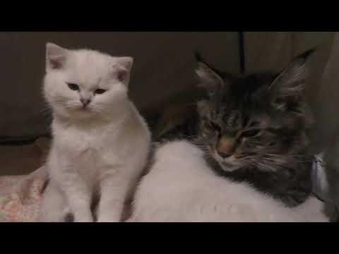 Вопрос: Может ли у кошки случиться выкидыш?