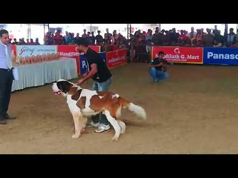 DOG SHOW 2018 THRISSUR