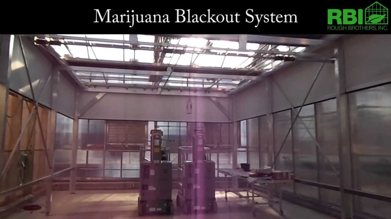 how to get marijuana out of your system