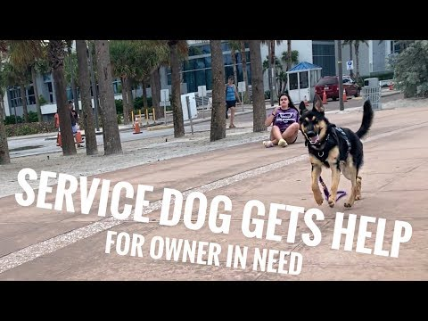 SERVICE DOG GETS HELP FOR OWNER W.15