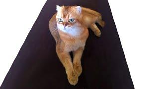 Про ДЕНЬГИ ,  про воспитание ЖЕНЫ и про кота Яшку