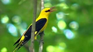 видео Кто такой орнитолог и кого он изучает?