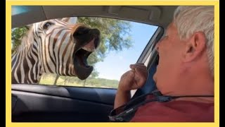 People Vs Animals:🐶 Best Comedy Animal Fails Compilation