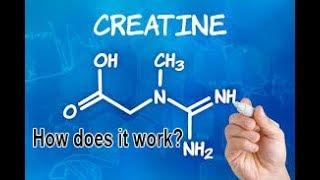 How Does Creatine work?