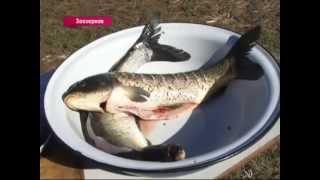 Дальневосточный рецепт. Рыба в шарабане