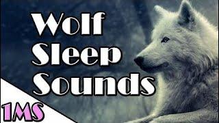 Sleep Music | 1h of Wolf Relaxing Sounds | Sounds Sleep Music #1
