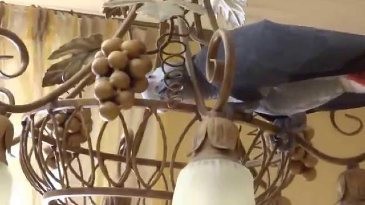 Попугай жако Филя - YouTube