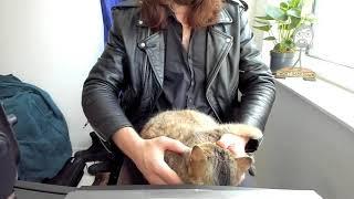 farrah-cat-snuggles