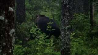 Дикая природа России 6. Urals / Первозданные долины.1080p