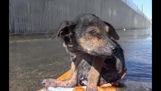 川に捨てられていた子犬 信じがたい事実と 奇跡的な回復を遂げる姿に… ...