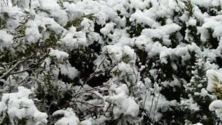 雪国-駒子 その愛- 坂本冬美(Fuyumi Sakamaoto, Japanese Enka song)/渡 健.wmv