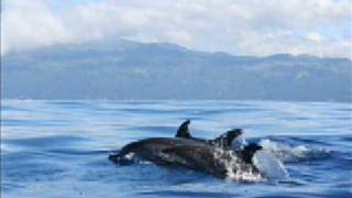 dolphin love pregnancy birthing and babies chris michell