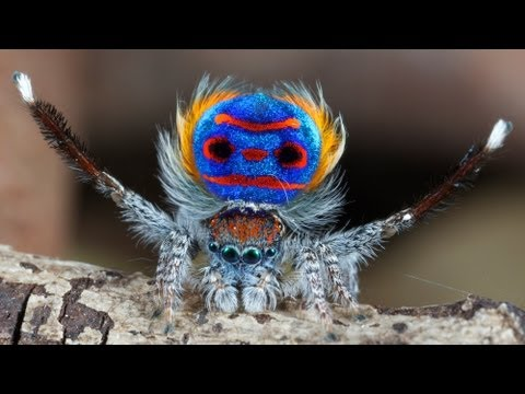 Flamboyant animals: seven of nature's most colourful show offs