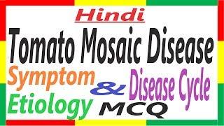 Tomato Mosaic Disease, Symptom, Etiology and Transmission | Plant Pathology | PHV#2