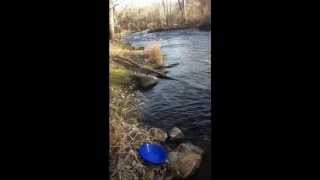 Gold Panning In Michigan Where to Get Gold Nuggets