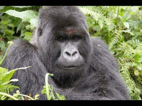 Adventure Africa CH2 - Rwanda