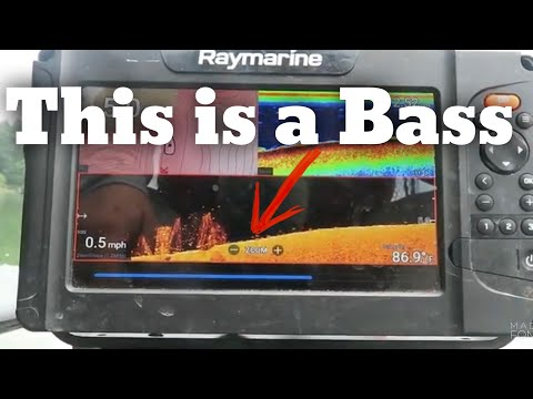 See Bass, Catch Bass - Bass Fishing - How To Read A Fishfinder