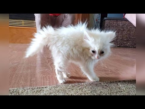 FUNNY CATS that deserve 100 MILLION VIEWS!