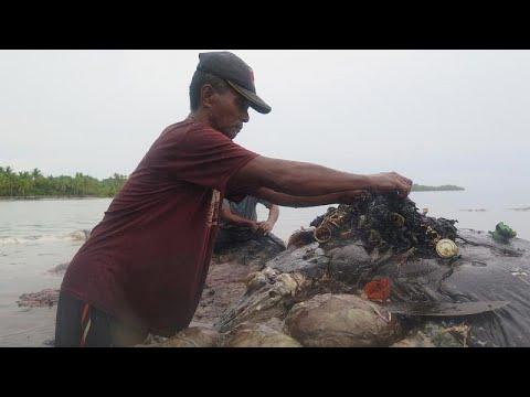 شاهد: نفوق حوت بعد العثور على 6 كيلوغرامات من مخلفات البلاستيك في إندونيسيا…  - نشر قبل 1 ساعة