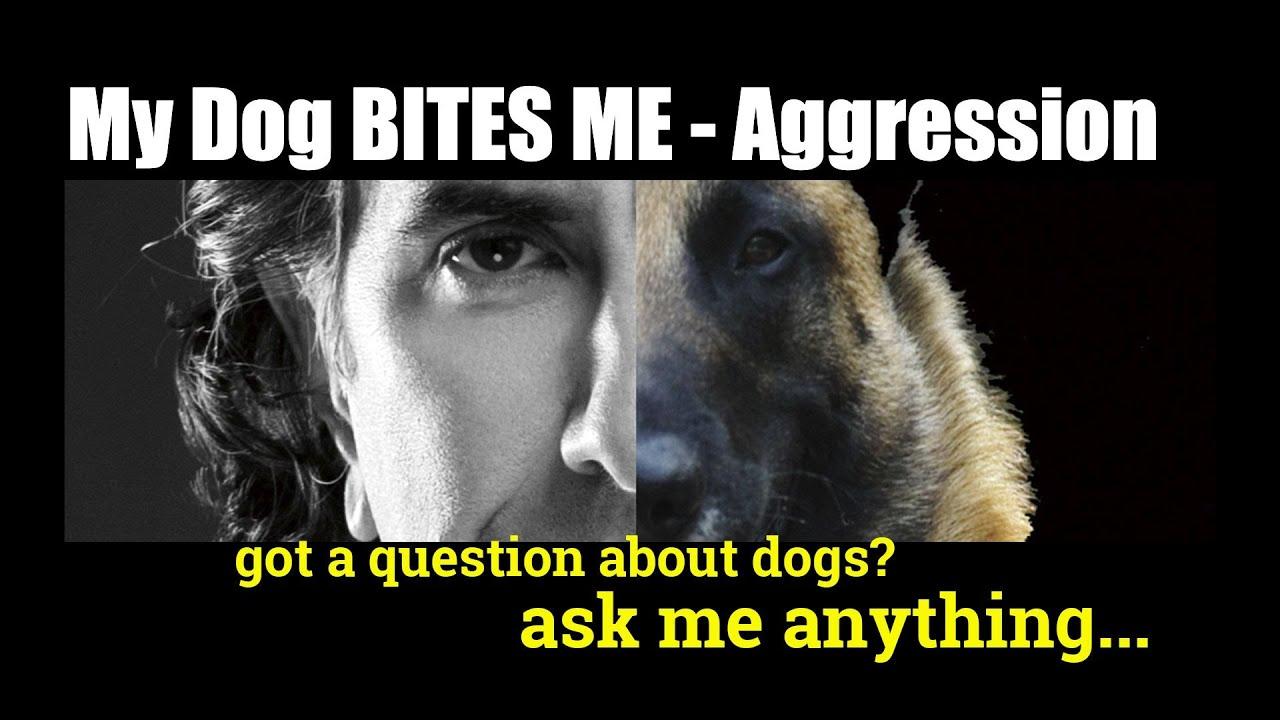 Aggressive Dog - Our Dog Bites - Biting Dog HELP - Dog Training Video