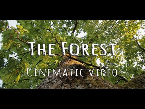 The Forest - A Cinematic Video (Zan Bassanese)